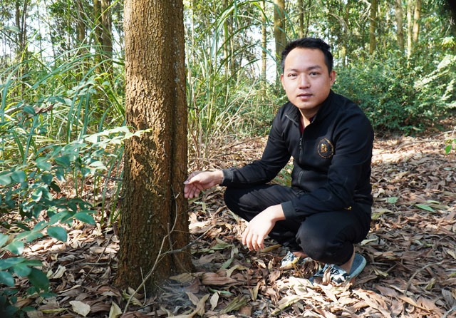 Forest plantations lift Phú Thọ farmers lives for good