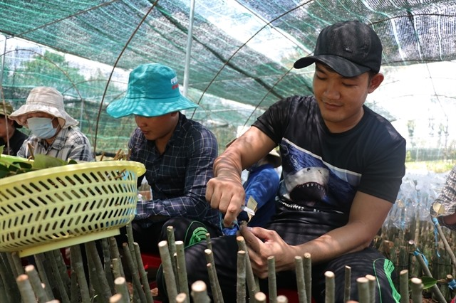 Mekong Delta to have quality breed sources for fishery fruit and rice