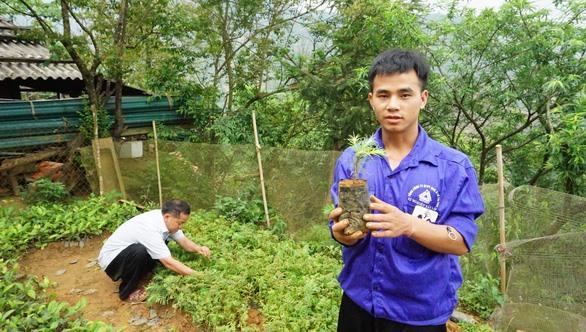 Conifer forest reborn in Sơn La Province