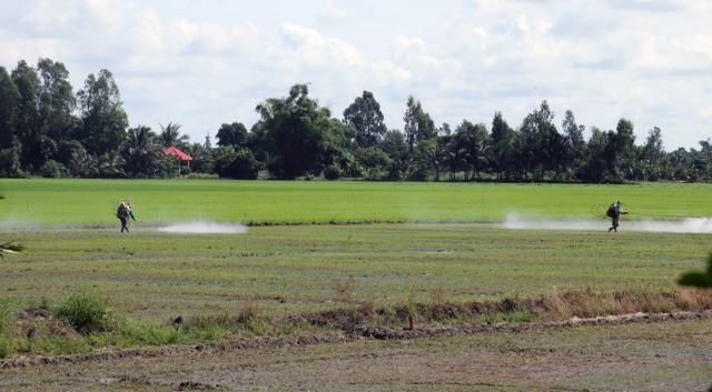 Countrys largest rice producing province expands advanced farming models