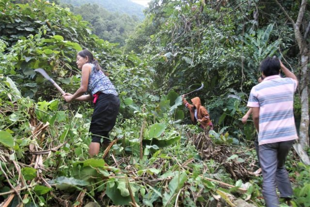 Forest environmental service fees scheme promotes forest protection in VN