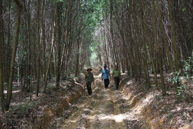 Central Highlands district achieves efficiency in growing forests
