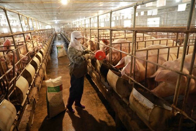Disease-free zones key to exporting animal products