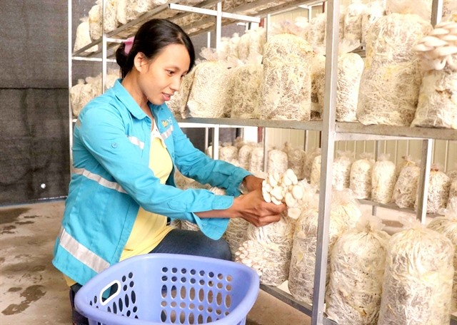 Mushroom farming brings prosperity in Bắc Ninh