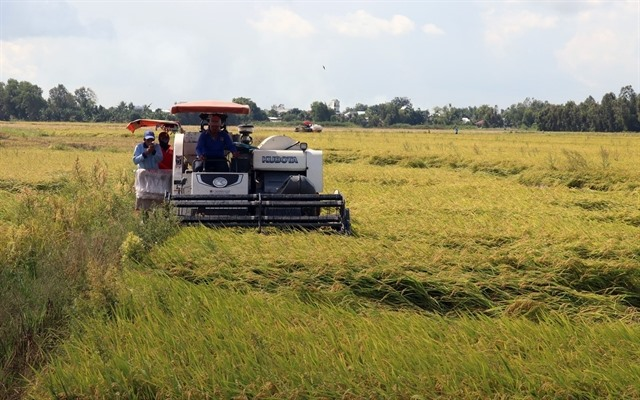 Kiên Giang sees positive results from restructuring agriculture new-style rural areas