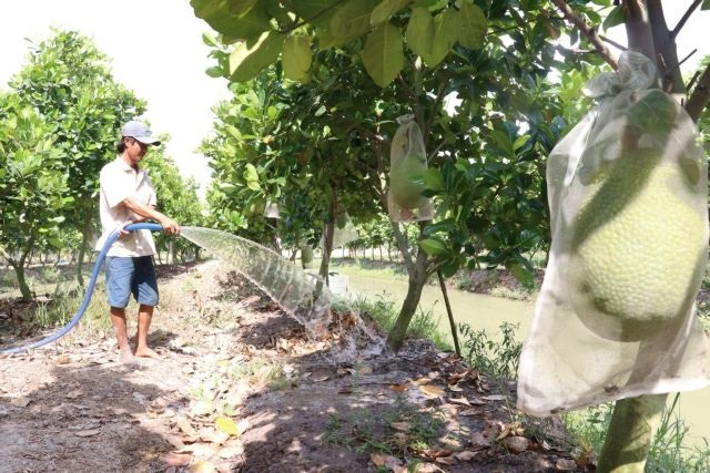 Đồng Tháp to expand fruit cultivation improve fruit value