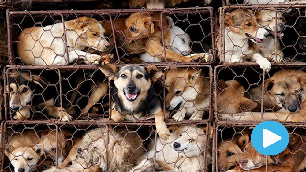Animal charity calls on Government to ban dog and cat meat trade