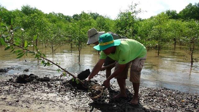Trà Vinh expands production-forest areas