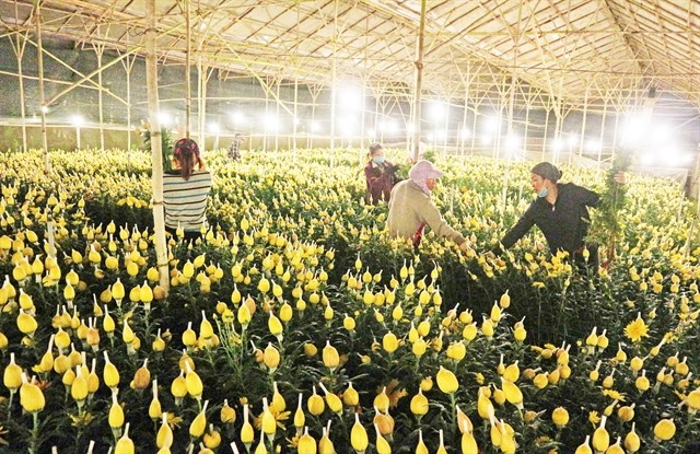 Flower growers look toonline sales amid COVID-19resurgence