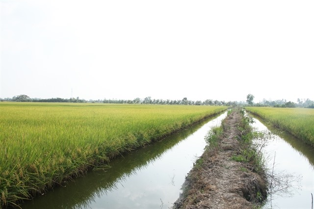High-tech shrimp farming brings high profits in Bạc Liêu Province
