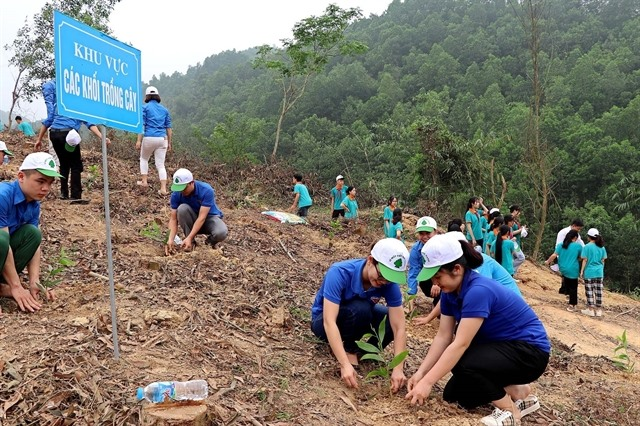 Govt gives green light to one billion tree planting project