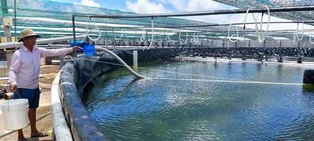 Bến Tres shrimp sector targets production value of 1 billionby 2025