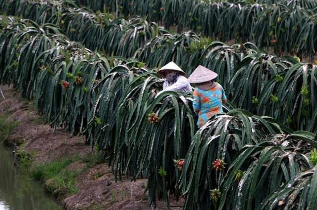 Hậu Giang Provinces rural vocational training programme achieves solid success