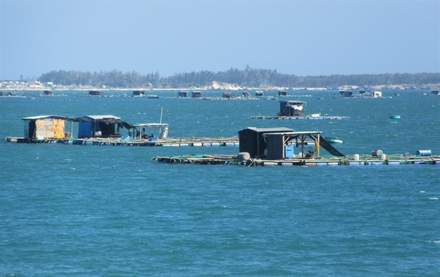 Farmers expand breedingof high-value fishin floating cages in Ninh Thuận