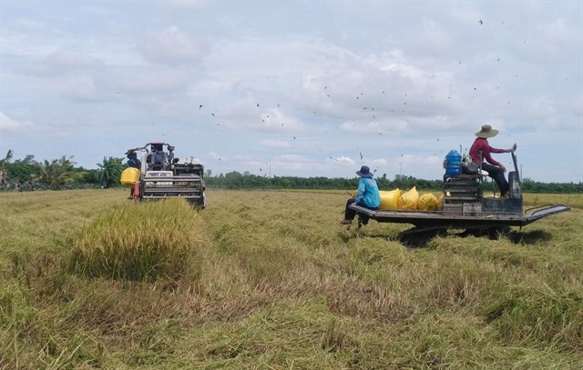 Đồng Tháp Province keen to develop agricultural products with geographical indications