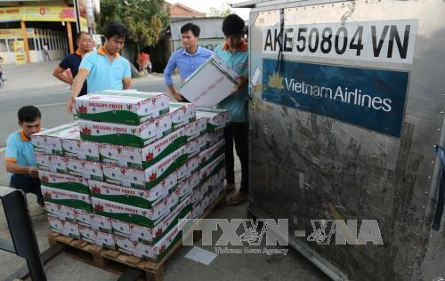 VN ships first batch of dragon fruit to Australia