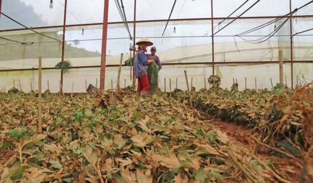 Problematic: Experts call for regulation of Đà Lạts greenhouses