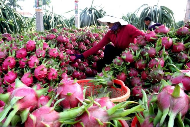 North needs more linkages with southern agricultural goods