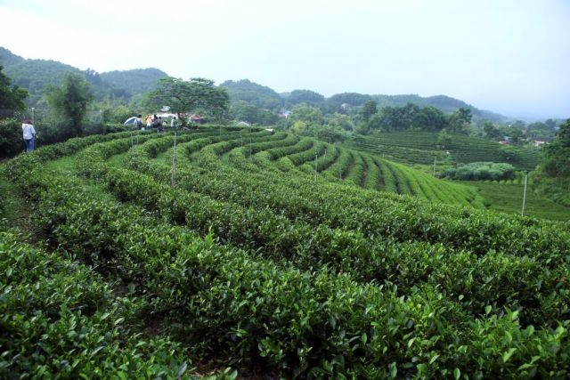 Developing raw material areas essential for Việt Nams agricultural growth