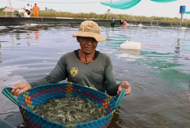 Kiên Giang widens efficient rice farming aquaculture models