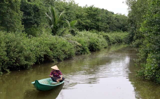 Kiên Giang recovers protective forests