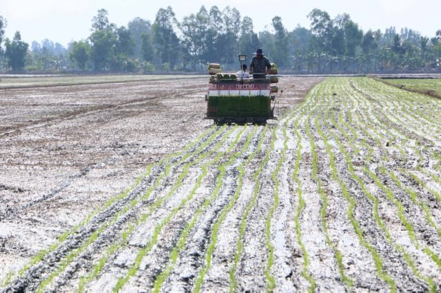 Trà Vinh develops new strains of rice other crops