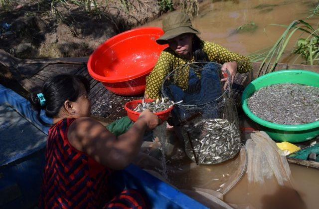 Đồng Tháp to flood rice fields for fertility flushing crop disease pathogens