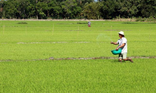 Kiên Giang farmers guaranteedoutletsfor high-quality rice