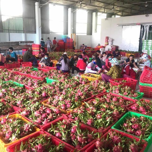 Tiền Giang sets export target of 3.4 billion in 2020