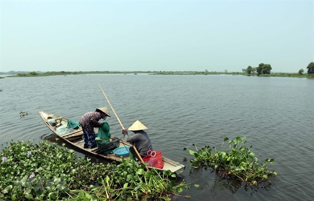 Thừa Thiên-Huế to build bird sanctuary in Ô Lâu estuary area