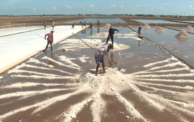 Bumper salt production high prices in Mekong Delta