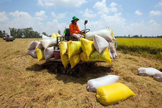 Rice growing localities exporters want export limits scrapped