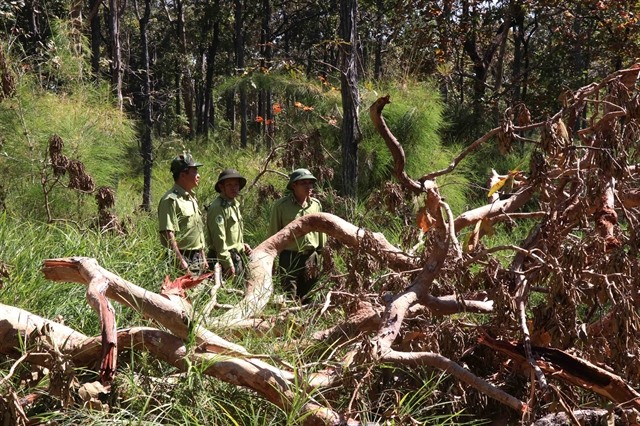 Deforestation continues to ragein Việt Nam