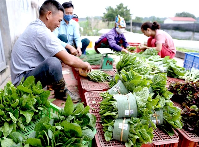 Hà Nội plans to expand safe vegetable growing area steadily