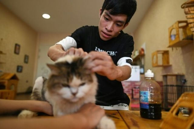 Cat cafe offers purr-fect pick-me-up for rescued felines
