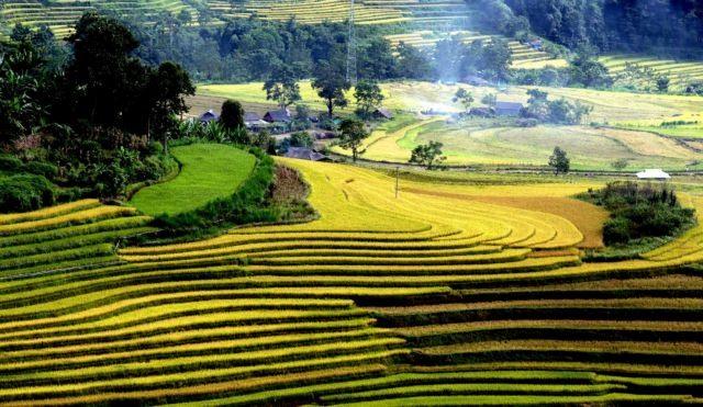 Golden terraces of TảLèng