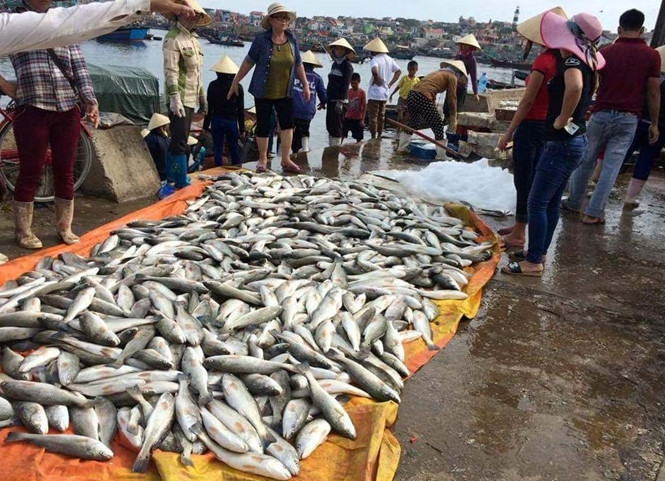 Red tide blamed for Thanh Hóa fish deaths