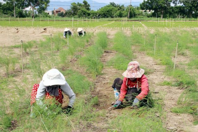 Ninh Thuận Province brings companies farm co-operatives together