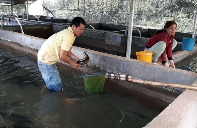 Farmers earn higher incomesfromcoldwater fish