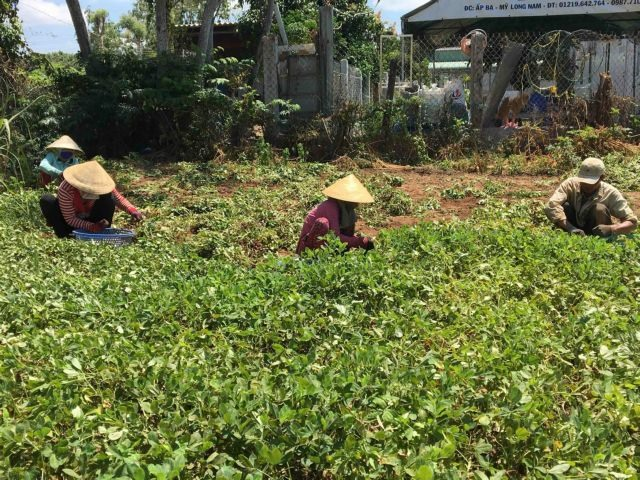 Trà Vinh eyes big cut in poverty rate this year