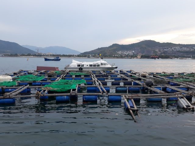 Nha Trang sets up zone for cage aquaculture