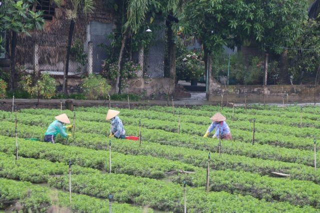 Tiền Giang develops specialised vegetable-growing areas