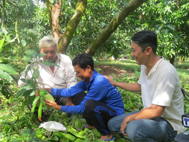 Đồng Tháp farmers grow mango in off-season to stagger supply sustain prices