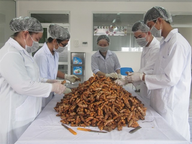 Turmeric offers remedy that profits farmers