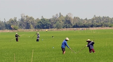 Kiên Giang to focus on 16 agricultural products
