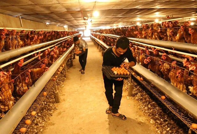Localities asked to take measures against bird flu