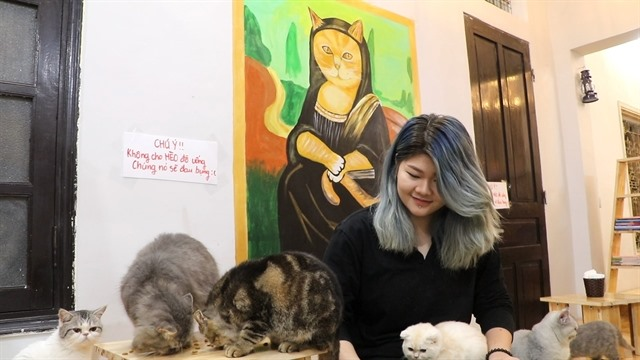 Cat cafe in the capital
