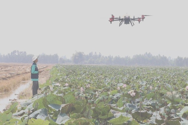 Đồng Tháp farmers adopt drones to spray crops