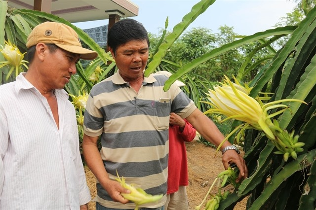 In climate change-hit Tiền Giang rice farmers switch to fruits vegetables