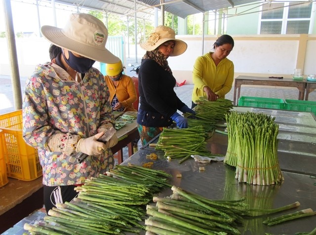 Ninh Thuận develops co-operatives sustainably